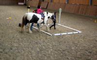 zahrajme si s koníky